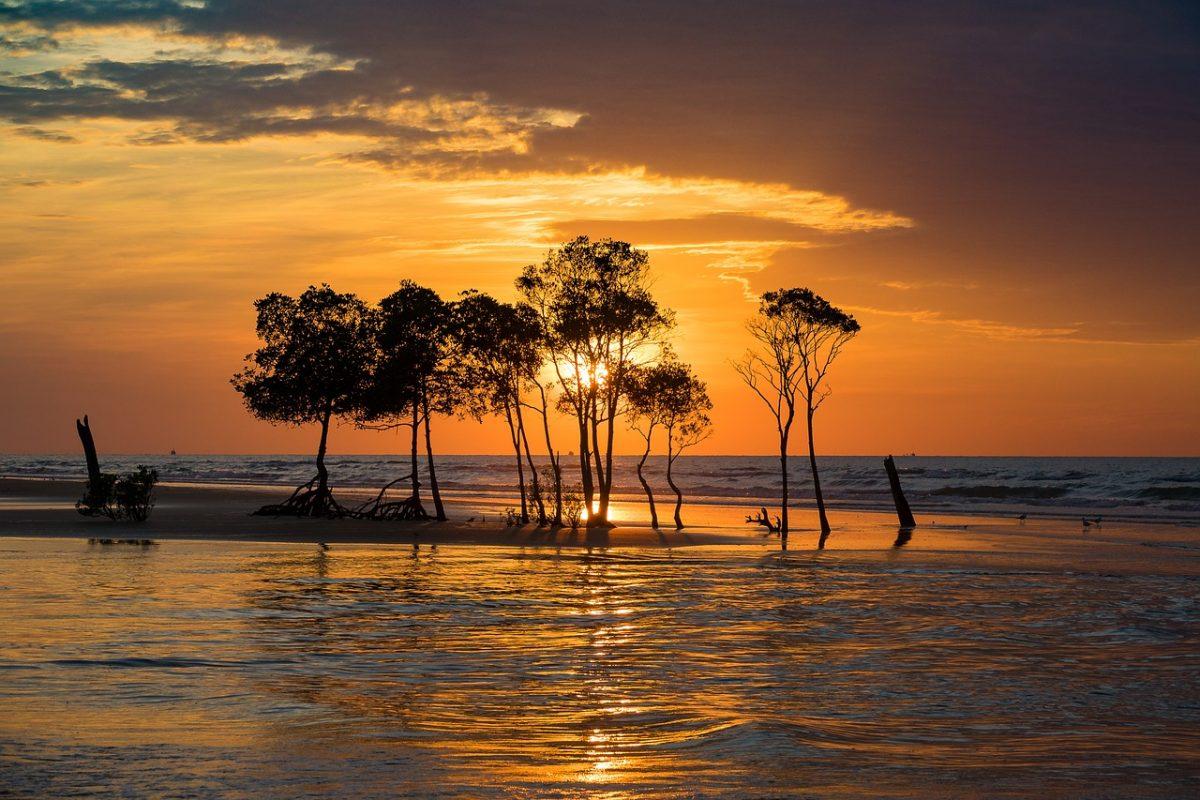 darwin sunset retirement